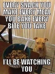 Watching You Meme - i ll be watching you funny dog memes awesome and funny picture