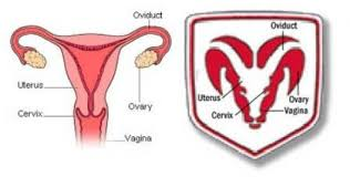 dodge ram logo uterus similarity the news wheel