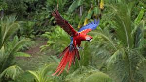 Wallpaper With Birds Birds Flight Parrots Color Tropical Hd Wallpapers With Birds For