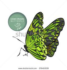 decorative stylized butterfly watercolor texture stock vector