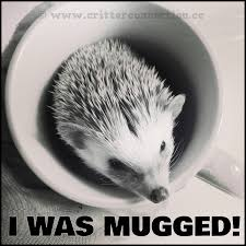 Hedgehog Meme - hedgies hedgehogs meme lol millermeade cute funny adorable