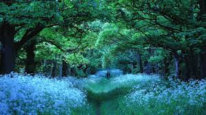 nature forest trees flowers path 2k 4k wallpaper high