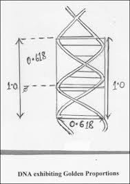 golden ratio dna spiral internet scientific publications