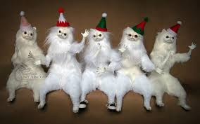 Persian Cat Meme - christmas persian cat room guardians by anyaboz on deviantart