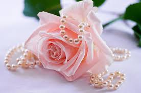 pearl rose necklace images Pearl necklace and soft pink rose stock photo image of female jpg