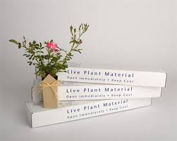 bereavement gift ideas sympathy flower plant pink drift gift boxed plant gifts