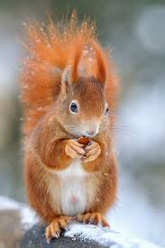 38 squirrel images adorable animals chipmunks