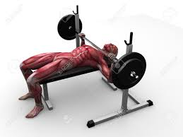 100 bench lifting best weight benches of 2017 comparisons