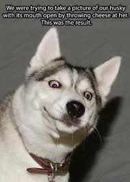Funny Dog Face Meme - funniest dog face i have seen in a while meme guy