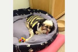 dog euthanasia neglected dog in uk has saved and avoids euthanasia