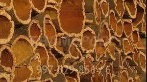 cork material cork cork oak sotavento portugal sd stock video 997 529 856