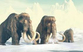 woolly mammoth genome meltdown