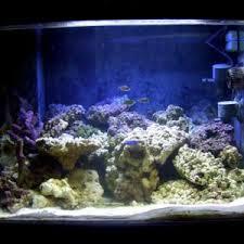 Aqueon Led Light Aqueon Led Light Reef Sanctuary