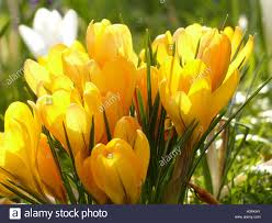 flower delivery near me flowers near me flower delivery stock photo 122661223 alamy