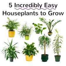 5 incredibly easy houseplants to grow2 png