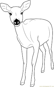 formosan sika deer coloring page free deer coloring pages