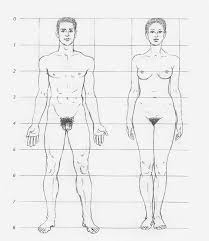 the male and female body figuredrawing pinterest female