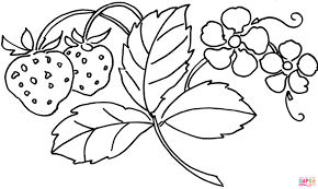 strawberry flower coloring page free printable coloring pages
