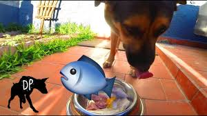 supplementing a raw dog food diet with fish raw fed dogs youtube