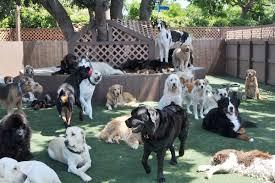 Dog In The Backyard by Bone Backyard Dog Daycare Dog Boarding Orange County The Bone