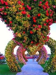 miracle flower garden dubai hearts dubai miracle garden