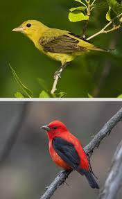 81 best birds of arkansas images on pinterest arkansas