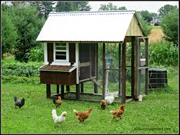 chicken coop design specifications with how to build a backyard