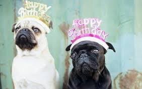 dog birthday party dog birthday party ideas summer happy everything animal planet