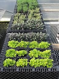Herb Garden Design Ideas Vertical Herb Garden Insteading