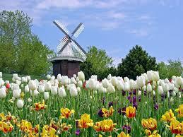 flower garden in amsterdam tulip wallpapers wallpaper cave