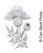 thistle clip art and stock illustrations 644 thistle eps