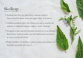 plants native to europe skullcap 101 traditional medicinals the highest quality herbal