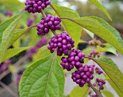 native nc plants 10 trees and shrubs for birds fairview garden center