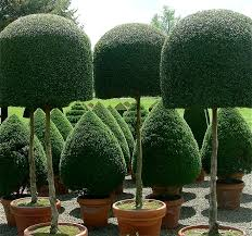 topiary trees 122 best toperaries images on topiary garden gardens