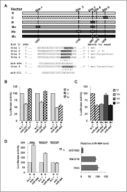 microrna 494 downregulates kit and inhibits gastrointestinal