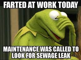 Frog Memes - 20 kermit the frog memes that are insanely hilarious sayingimages com
