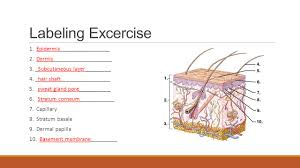 opening assignment 1 the 4 types of tissues ppt video online