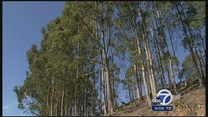 vegetation in oakland hills becomes topic in east bay