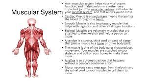 Human Anatomy And Body Systems Study Jams Human Body Systems The Human Body The Human Body Is
