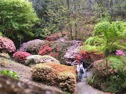 Mt Lofty Botanic Gardens Azalea Bushes Mt Lofty Botanic Gardens Mapio Net