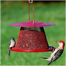 no no cardinal wild bird feeder with lyric black oil sunflower