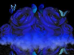 flowers blue roses butterflies water flowers blueroses