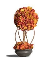 potare le ortensie in vaso bonsai ortensia piante stabilizzate