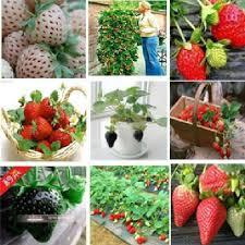 Diy Strawberry Planter by Online Get Cheap Strawberry Planter Aliexpress Com Alibaba Group