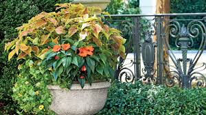South Florida Landscaping Ideas Spectacular Container Gardening Ideas Southern Living