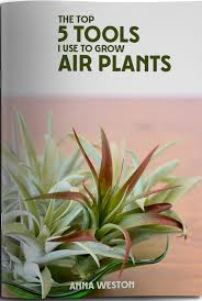 best plants for air quality air circulation temperature humidity modern air plants