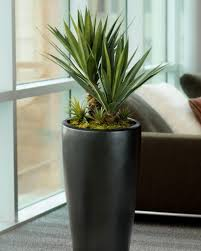 beauiful silk and artificial plants for office u0026 home decorating