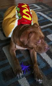 small dog witch costume pit bull halloween dog costume tips u0026 tricks pinterest