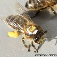 pesticides hit queen bee numbers bbc news