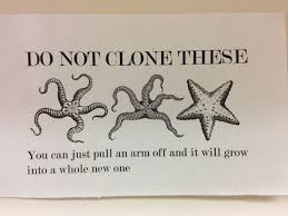 Starfish Meme - 82 best class memes images on pinterest science biology jokes and gym